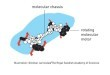 Advances in Molecular technologies enabling Molecular Robotics, the Ultimate Miniature Machines